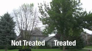 KC Arborist Tree Care - Insect & Disease Injections - ArborJet