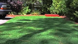 Bermudagrass Summer Maintenance